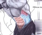 abdomen parfait